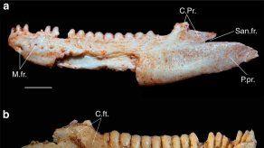 Descubren en Brasil un fósil de lagarto de 80 millones de años