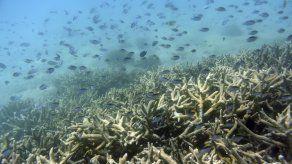 "Australia reduce perspectivas de arrecife a ""muy malas"""