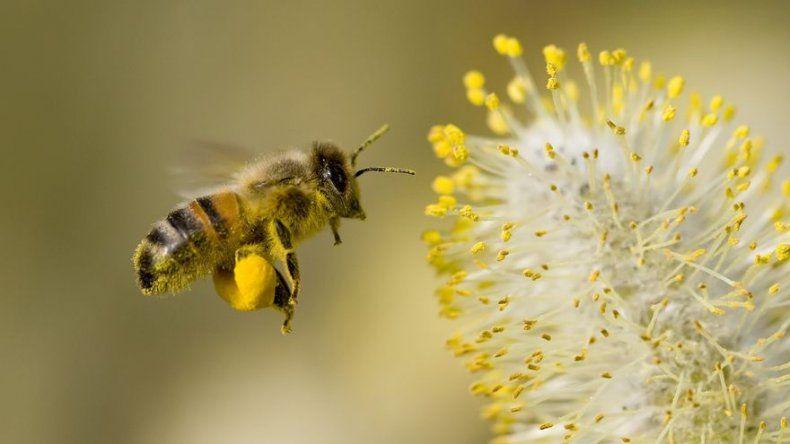 En Rumanía, las abejas ayudan a la medicina