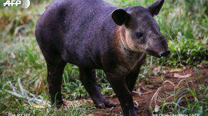 Varias muertes de exóticos animales encienden las alarmas en Malasia