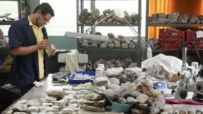 Buscan desentrañar en El Salvador secretos de fósiles de hace millones de años