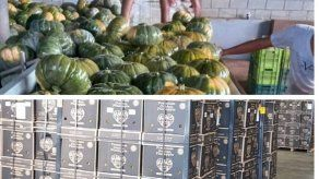 Empresa panameña exportará 120 contenedores de zapallo hacia EEUU