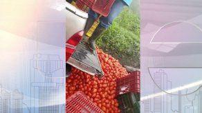Productor denuncia pérdida de tomate debido a importaciones