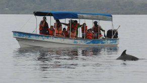 Tráfico de embarcaciones turísticas en Bocas del Toro amenaza supervivencia de delfines