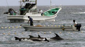 Piden a corte que detenga caza de delfines en Japón