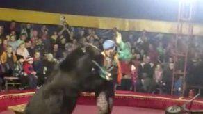 Oso de circo ataca a su entrenador en pleno show en Rusia