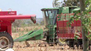 Monsanto y productores paraguayos llevarán la soja transgénica al Chaco