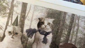 Los gatos de Taylor Swift protagonizan su postal navideña