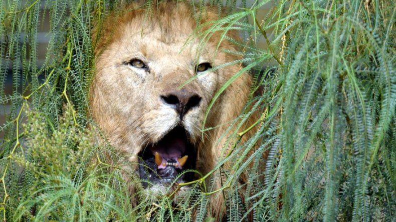 Los humanos son súper predadores que deben cambiar hábitos de caza y pesca