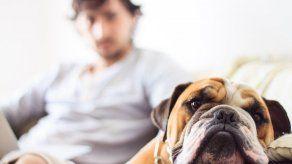 Vicealcaldesa Banfield insta a ciudadanos a actuar contra el maltrato animal