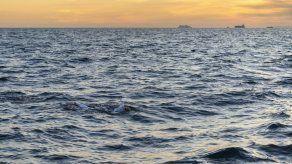 Sobreviviente de cáncer cruza a nado el Canal de la Mancha