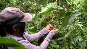 Indígenas trans en Colombia