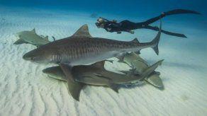 Panamá acoge taller sobre estrategias para protección de tiburones
