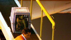 United se une a Delta en limitar más a animales en cabina