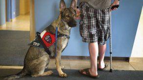 EEUU: El problema de los perros de servicio falsos