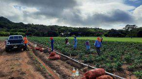 Sector agropecuario creció un 5% a pesar de la pandemia del COVID-19 en Panamá