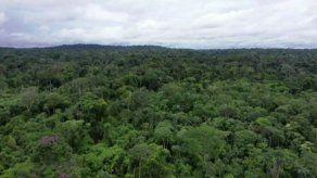 Cinco cosas a saber sobre la Amazonía