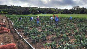 Impulsan en Panamá implementación de una plataforma de registro de productos agropecuarios
