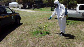Declaran estado de emergencia fitosanitaria por brote de huanglongbing en cítricos en El Valle de Antón