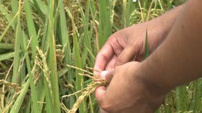 MIDA: Sector agropecuario creció un 5% en medio de pandemia