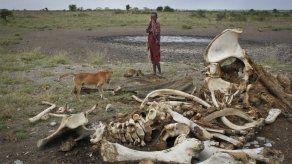 Estudio: 100.000 elefantes muertos en África entre 2010 y 2011