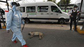 Medidas contra coronavirus no disminuyen violencia en México