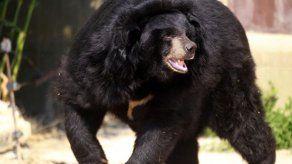 El kárate salva a un japonés de las garras de un oso