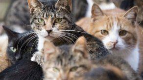 Ofrecen asesoramiento veterinario en línea