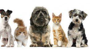 Perros y gatos pueden contagiarse del Covid-19 de sus amos