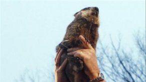 La marmota Phil predice seis semanas más de invierno