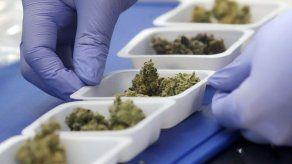 Científicos estudian los brownies de marihuana