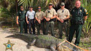 Capturan un caimán de 4 metros en un parque de la costa oeste de Florida