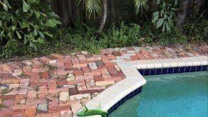 Es tan frío en Florida que iguanas caen de sus perchas