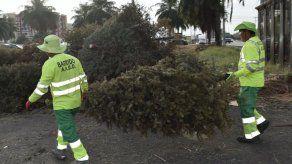 Mañana finaliza operativo de recolección de arbolitos de Navidad por la AAUD