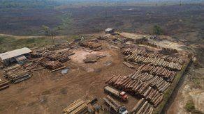Brasil: Despiden a funcionaria tras aumento de deforestación