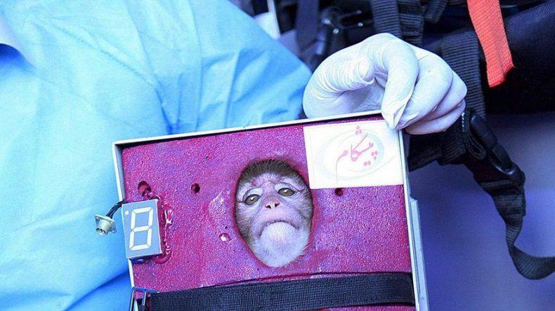 Programa espacial de Irán envía mono al espacio