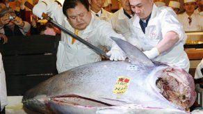 Venden atún rojo en 1
