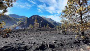 Incendios de masa vegetal consumen más de 150 hectáreas en Tierras Altas