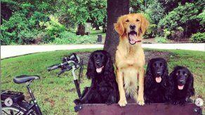 James Middleton pide ayuda para recuperar su bicicleta con remolque para perros