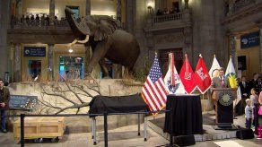 Un tiranosaurio llega a Washington a quedarse en el Museo de Historia Natural