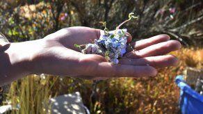 Papeles reciclados que florecen