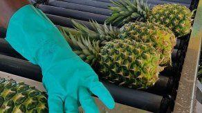 Panamá busca potenciar exportaciones de piña