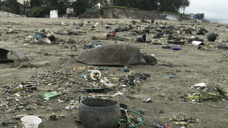 Al menos 20 tortugas mueren en Bangladés atrapadas por residuos plásticos