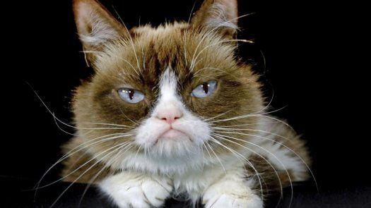 Grumpy Cat, la gata sensación en internet, muere a los 7 años