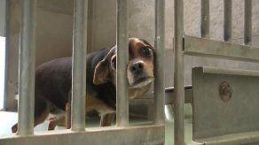 El confinamiento hace aumentar las adopciones de animales en Bélgica