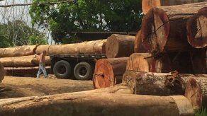 Hay 5 detenidos y 45 denuncias interpuestas por tala ilegal en Panamá