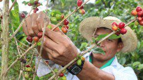 Migración tramitó 235 permisos a nativos de la Comarca Ngäbe Buglé para trabajar en Costa Rica