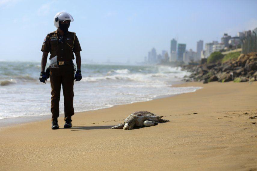 Las tortugas muertas mostraban hemorragias en las bocas