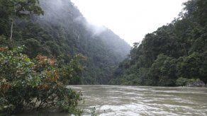 Bosques panameños absorben más gases de efecto invernadero que los que se emiten