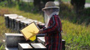 Importaciones chinas en el centro de fraudes en la industria de la miel